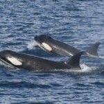 zahara360 orcas_1